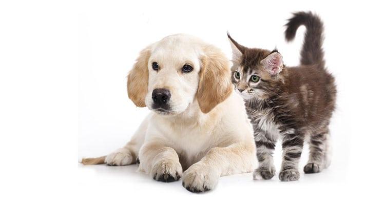 Geruchs- und Geschmackssinn von Hunden und Katzen