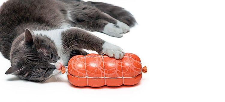 unde und Katzen brauchen neben viel frischem Fleisch auch entsprechende Mengen an Kohlehydraten