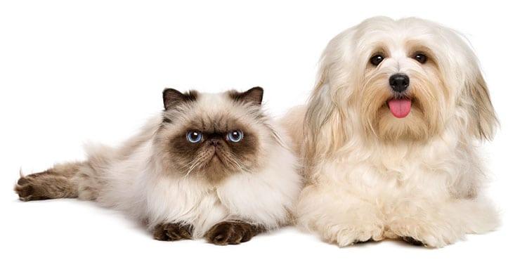 Hundefutter, Katzenfutter Gentechnikfrei