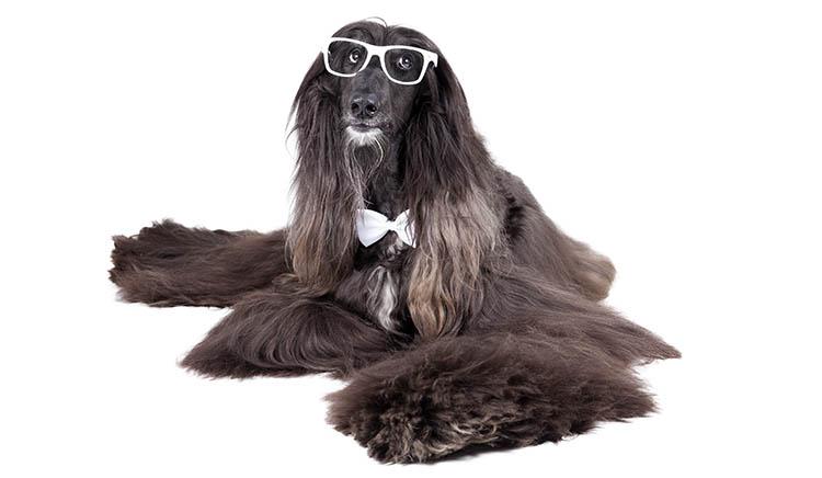 blog f r katzen hunde welpen und deren besitzer. Black Bedroom Furniture Sets. Home Design Ideas